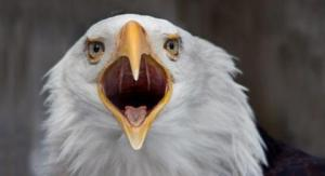 bald-eagle-douglas-brown-dpc